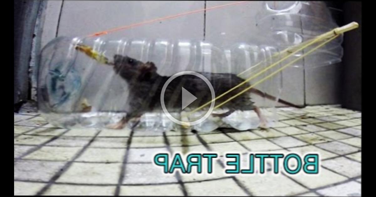 как ловить мышей в бутылку видео