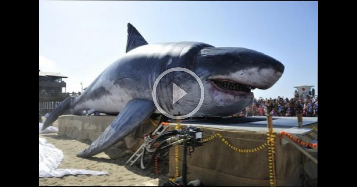 real megalodon found worlds biggest shark ever found